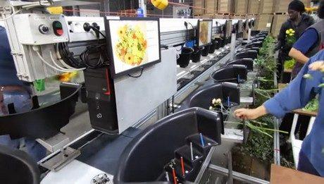 Mecaflor export Dinamic